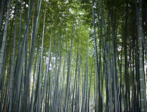 Neuwertige Natürlichkeit: Eroberung vom Bambusparkett